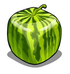 Square watermelon isolated on white background vector