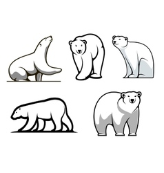 White polar bears set vector image