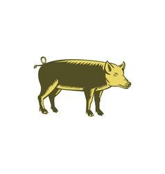 Tamworth Pig Side Woodcut vector image