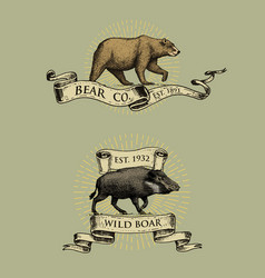 bear and boar logos emblems or badges with wild vector image