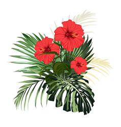 botanical beautiful tropical flowers vector image