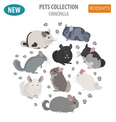 Chinchilla breeds icon set flat style isolated on vector