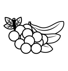 fruits fresh organic vector image