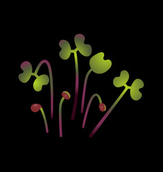 Microgreens red cabbage bunch of plants black vector
