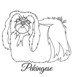 pekingese dog outline vector image