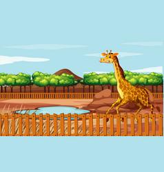 scene with giraffe in zoo vector image