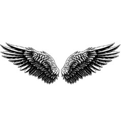 spread wings an eagle vector image