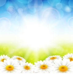Flowers on the summer background vector image vector image