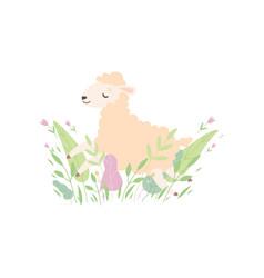 adorable little lamb cute sheep animal lying on vector image