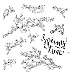 Set of spring branches isolated on white vector