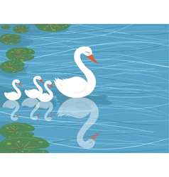 Swans on water vector