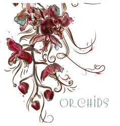with engraved orchid flowers vector image