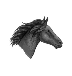 Black stallion horse sketch with racehorse head vector image