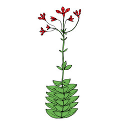 home cactus plants or flower cozy cute element vector image