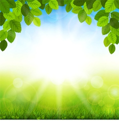 Summer background with green leaves vector