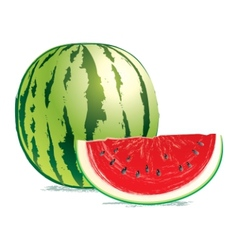 tasty fresh watermelon vector image