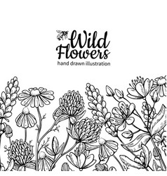 wild flowers drawing set isolated meadow vector image vector image