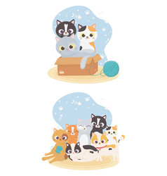cats make me happy cute cats in box with wool vector image