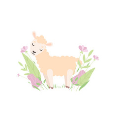 cute little lamb adorable sheep animal standing vector image