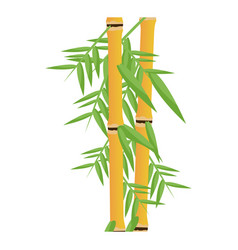 fresh bamboo leaves botanical zen forest tropical vector image