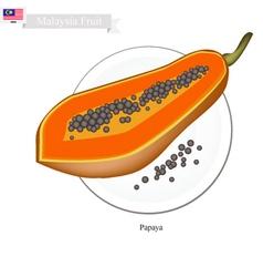 Fresh papaya a famous fruit in malaysia vector