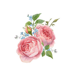 Watercolor rose omposition vector