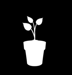 white silhouette of growing plant in the pot vector image