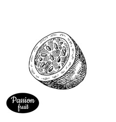 Hand drawn sketch style fresh passionfruit vector