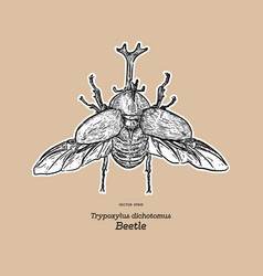 Japanese rhinoceros beetle trypoxylus dichotomus vector