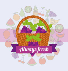 label wicker basket with always fresh grapes vector image