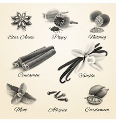 Spices set black and white vector