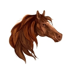 Bay horse with long mane portrait vector image vector image