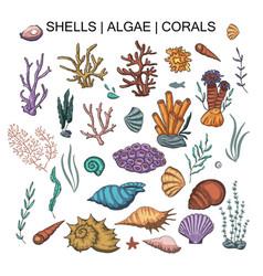 algae coral and shells big set vector image