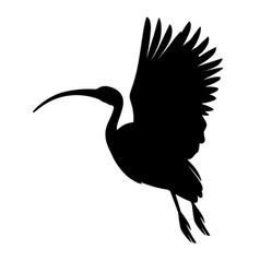 black silhouette american white ibis flying vector image