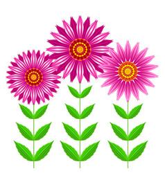Echinacea purpurea flowers vector