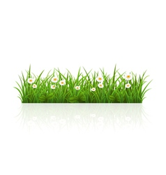 Summer grass vector