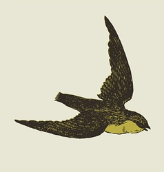 bird sketch vector image