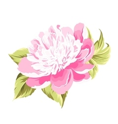 Peony spring flower vector image vector image