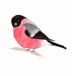 watercolor bird bullfinch vector image vector image