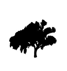 black silhouette of leafed tree isolated on white vector image