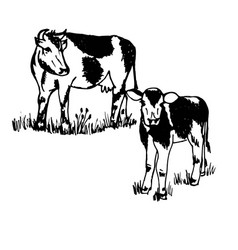 Doodle pet on farm cow and calf black outline vector