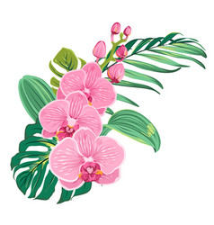 Flowers orchid bouquet with tropical leaves vector