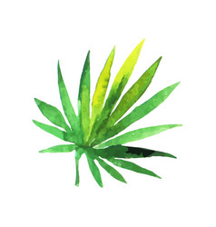 Green fan palm leaf hand drawn watercolor vector