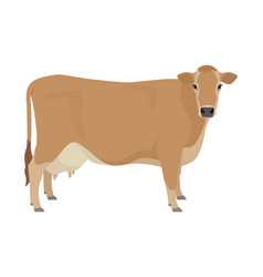 Jersey cattle flat isolated object vector