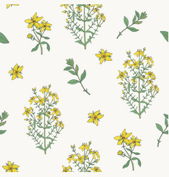 seamless pattern with st john s wort medical vector image