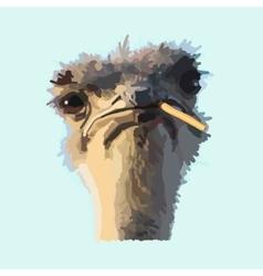 African ostrich vector