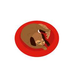 Flat sleeping curled up dog pet icon vector
