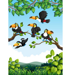 Group toucan in nature vector