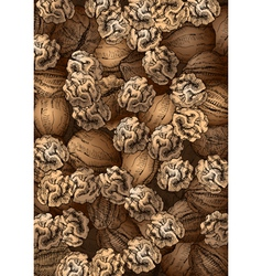 Hand Drawn Walnuts Texture vector image
