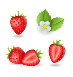 realistic sweet strawberry set with leaves and vector image